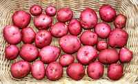 Red_potatoes_(2)