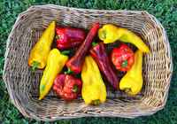 Sweet_peppers_2