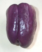 Peppers-purple_bell